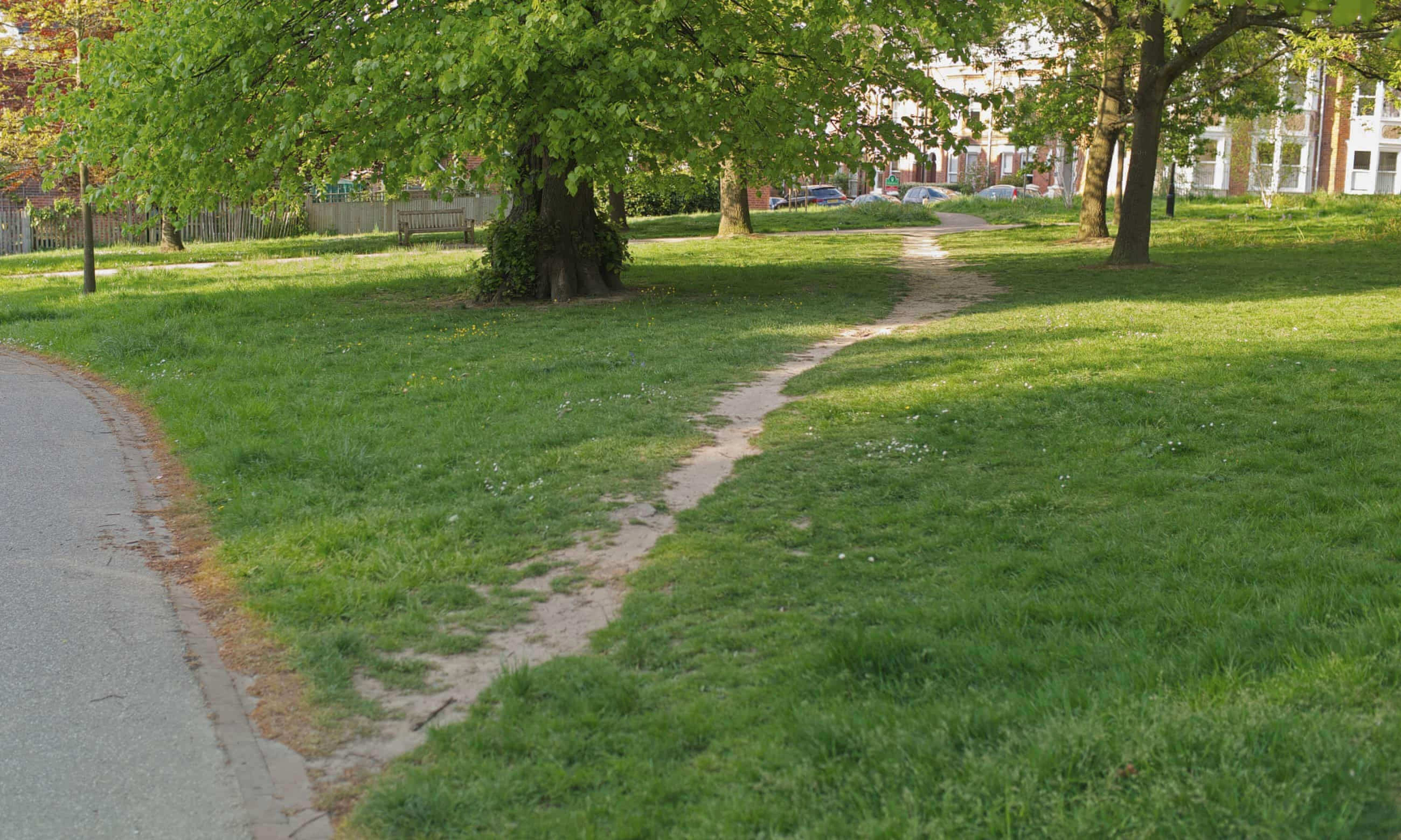 Photo of a green park